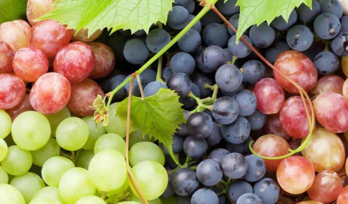 The benefits you have from grapes