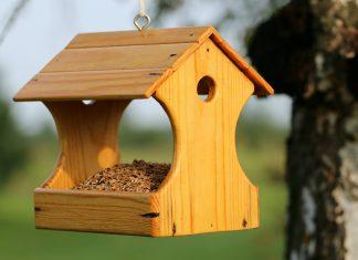 Bird nest Singapore