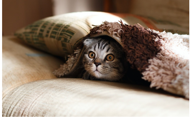 The Ultimate Guide to Being a Cat Owner,